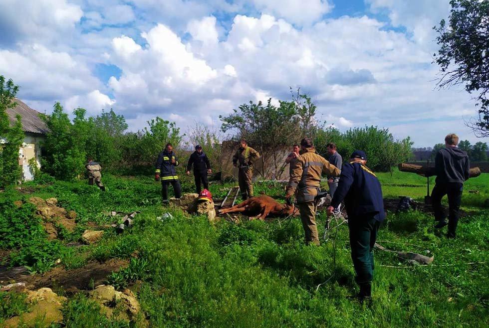Под Днепром из 6-метрового колодца пожарные спасали теленка, - ФОТО, ВИДЕО, фото-2