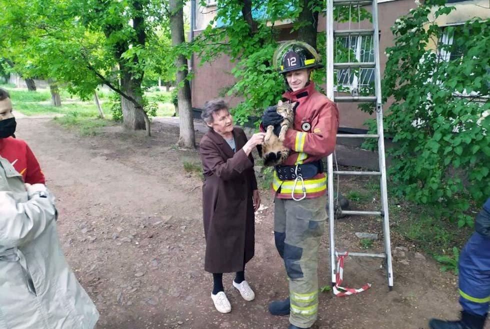 На Днепропетровщине спасатели снимали кота с 10-метровой высоты, - ФОТО, фото-1