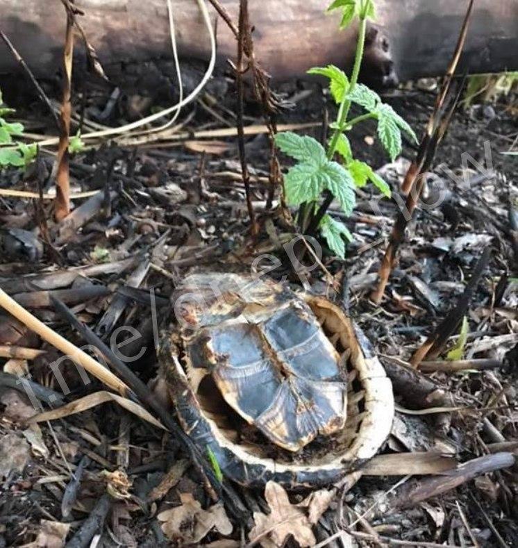 На Днепропетровщине сгорели 15 черепах, предварительно - из-за браконьеров, - ФОТО, фото-2