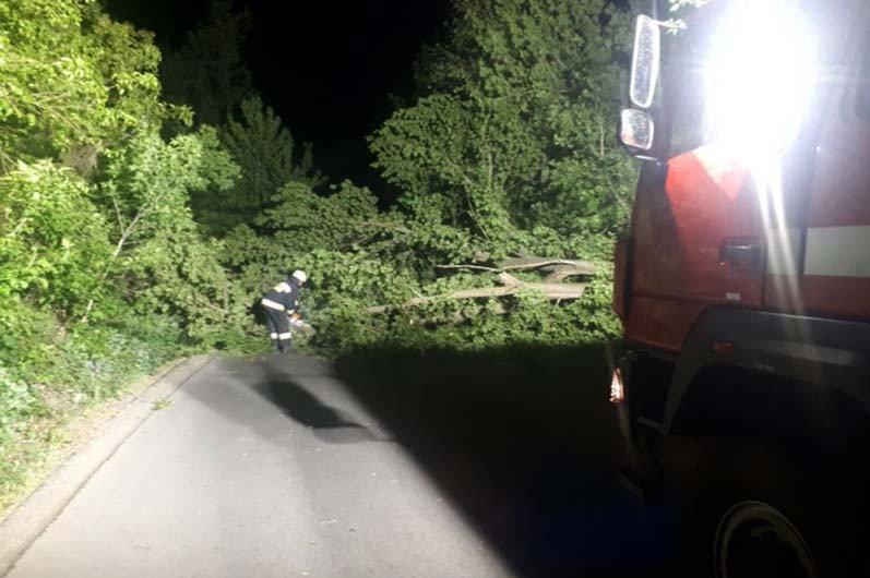 В Днепре ночью сильный ветер повалил деревья на дороги, - ФОТО , фото-1