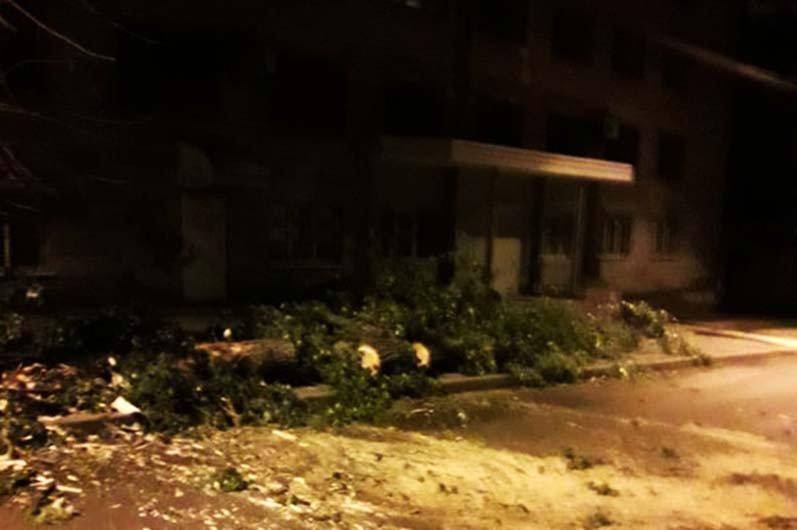 В Днепре ночью сильный ветер повалил деревья на дороги, - ФОТО , фото-2