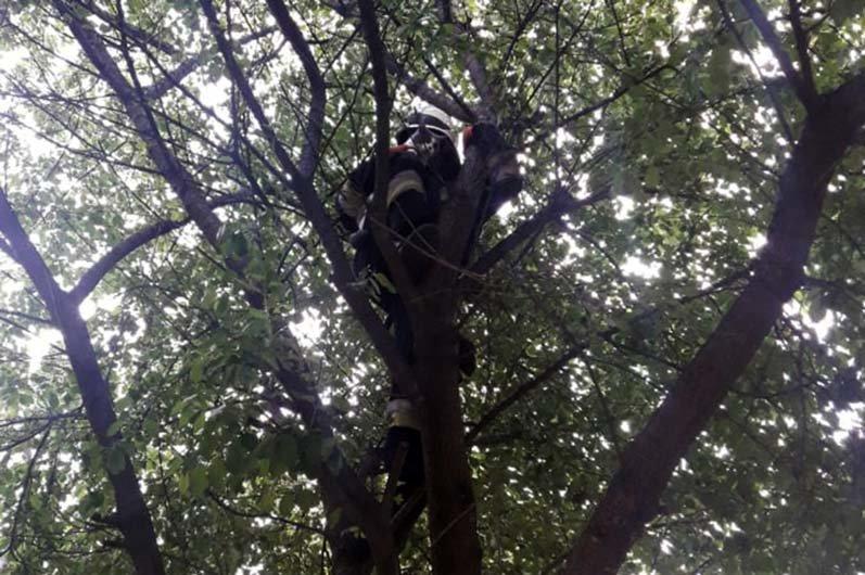 В Днепре кот застрял на дереве и не мог самостоятельно слезть, - ФОТО, фото-2