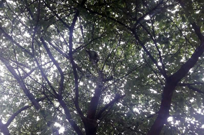 В Днепре кот застрял на дереве и не мог самостоятельно слезть, - ФОТО, фото-1