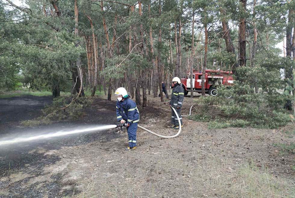 В Днепропетровской области два часа тушили пожар в лесу, - ФОТО, фото-1