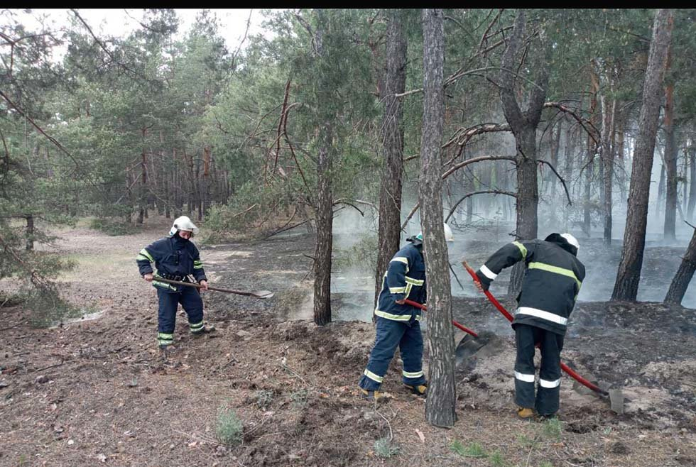 В Днепропетровской области два часа тушили пожар в лесу, - ФОТО, фото-3