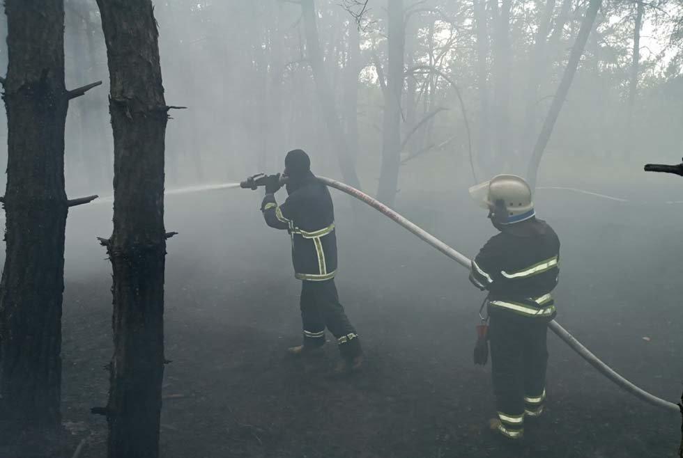 В Днепропетровской области два часа тушили пожар в лесу, - ФОТО, фото-2