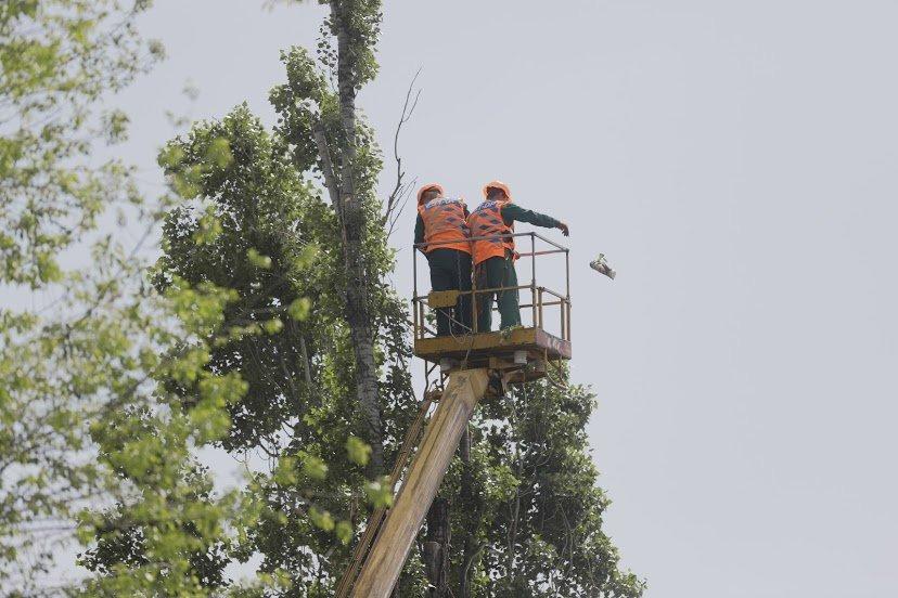 В Днепре жалуются на опасные аварийные деревья, - ФОТО, фото-9