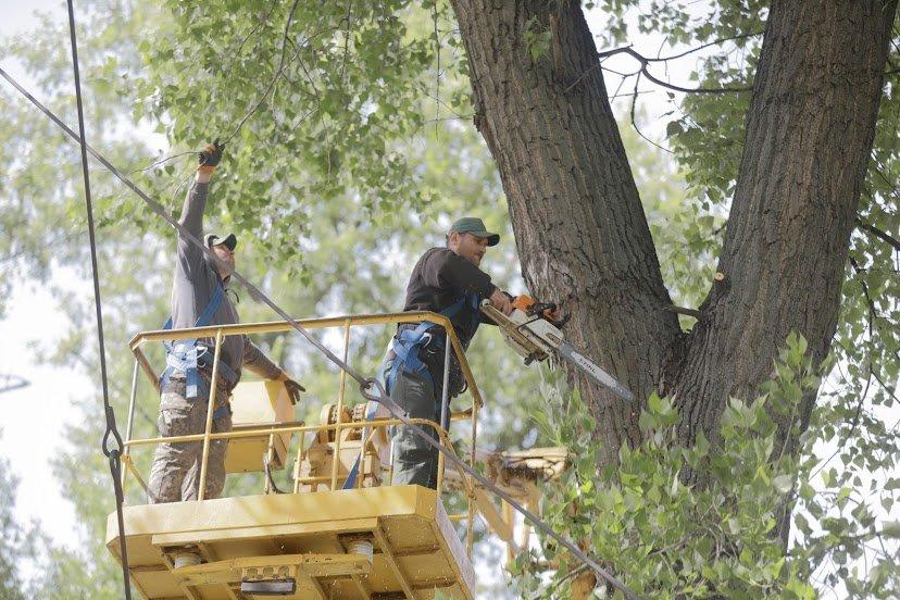 В Днепре жалуются на опасные аварийные деревья, - ФОТО, фото-2
