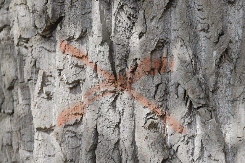 В Днепре жалуются на опасные аварийные деревья, - ФОТО, фото-5