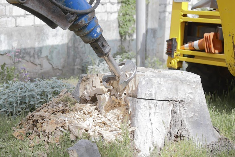 В Днепре жалуются на опасные аварийные деревья, - ФОТО, фото-4