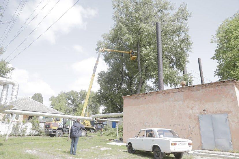 В Днепре жалуются на опасные аварийные деревья, - ФОТО, фото-7