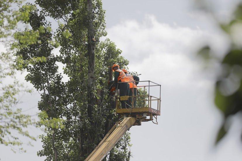 В Днепре жалуются на опасные аварийные деревья, - ФОТО, фото-8