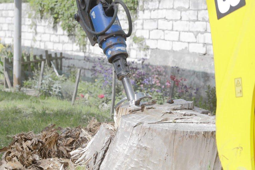 В Днепре жалуются на опасные аварийные деревья, - ФОТО, фото-6