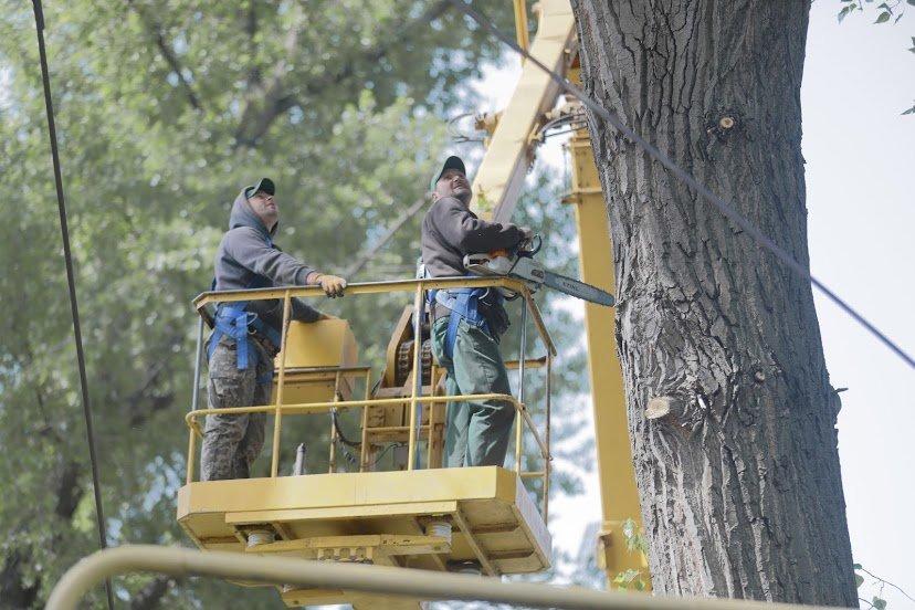 В Днепре жалуются на опасные аварийные деревья, - ФОТО, фото-3