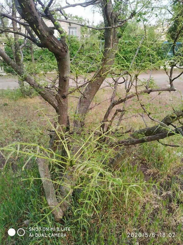 В одном из парков Днепра началось нашествие гусениц, - ФОТО, фото-8