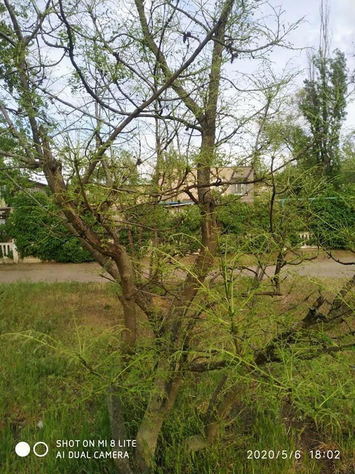 В одном из парков Днепра началось нашествие гусениц, - ФОТО, фото-7