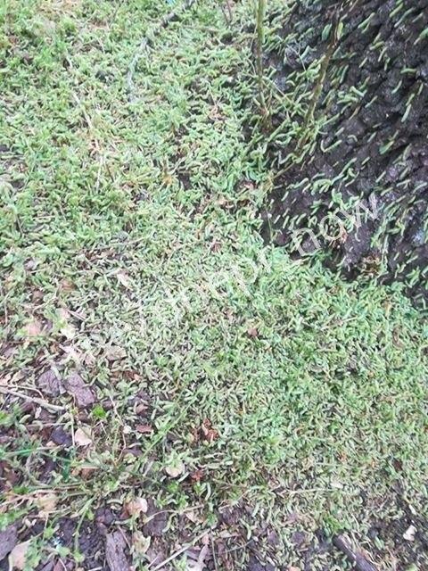 В одном из парков Днепра началось нашествие гусениц, - ФОТО, фото-4