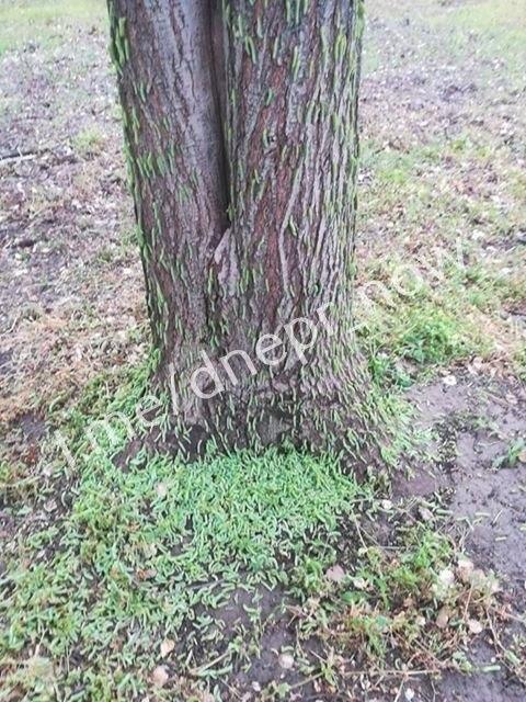 В одном из парков Днепра началось нашествие гусениц, - ФОТО, фото-2