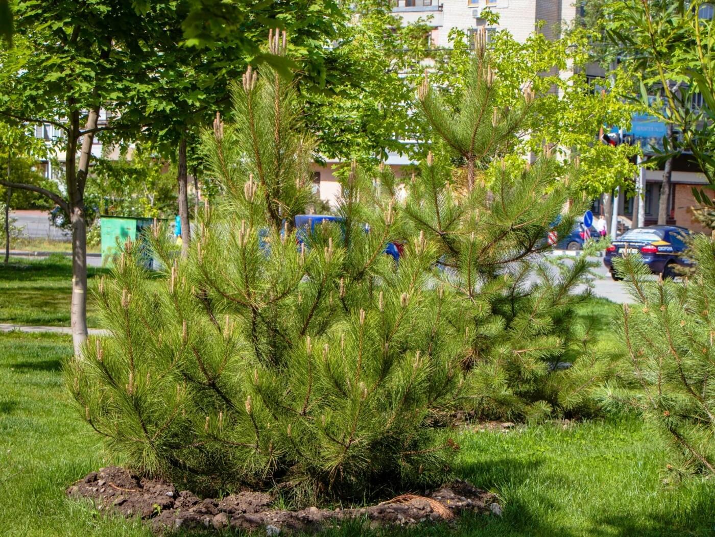 В Днепре высадили 1900 деревьев, - ФОТО, фото-2