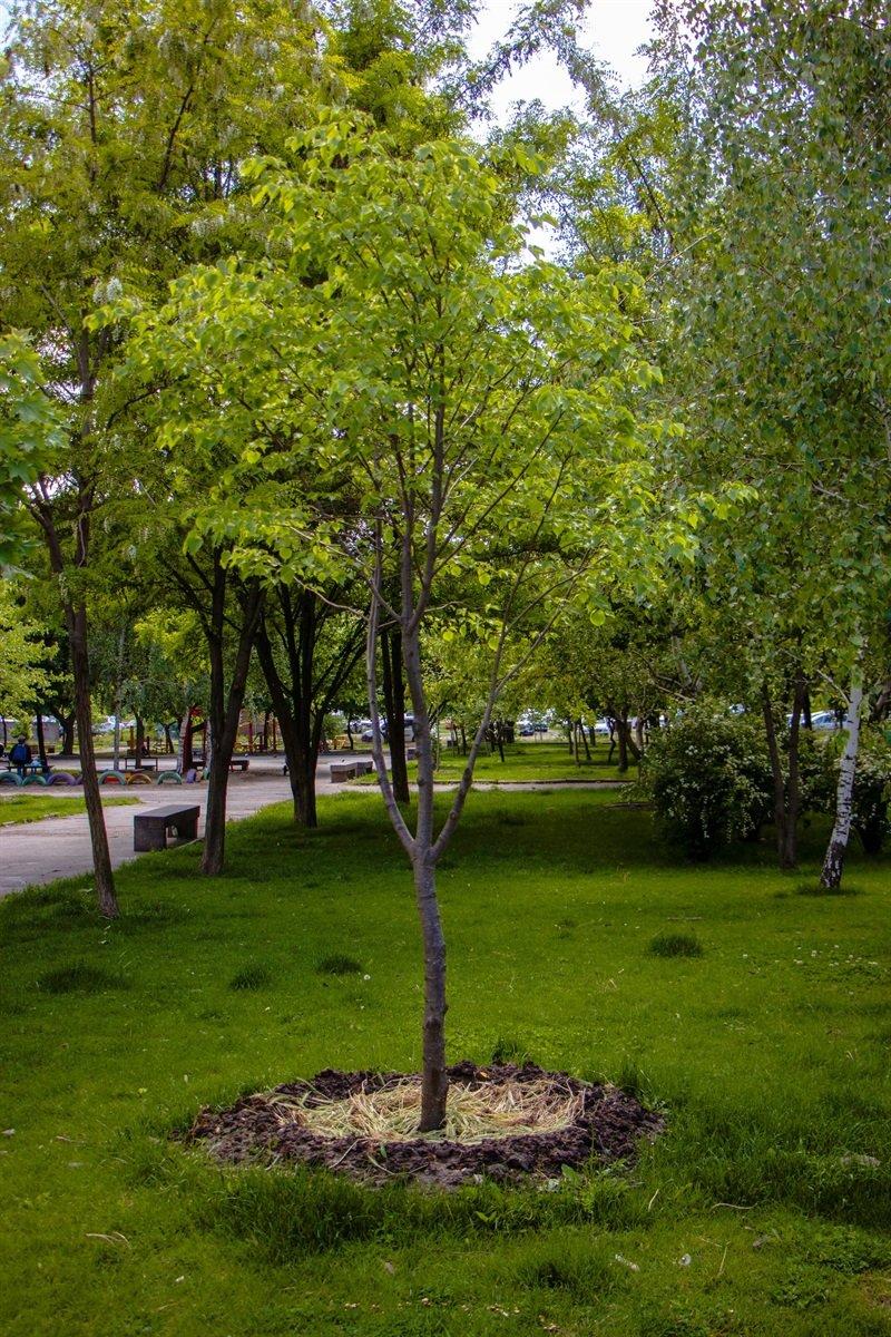 В Днепре высадили 1900 деревьев, - ФОТО, фото-3