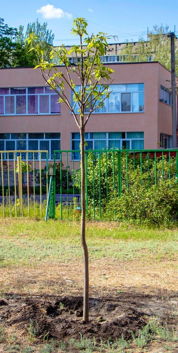 В Днепре высадили 1900 деревьев, - ФОТО, фото-5