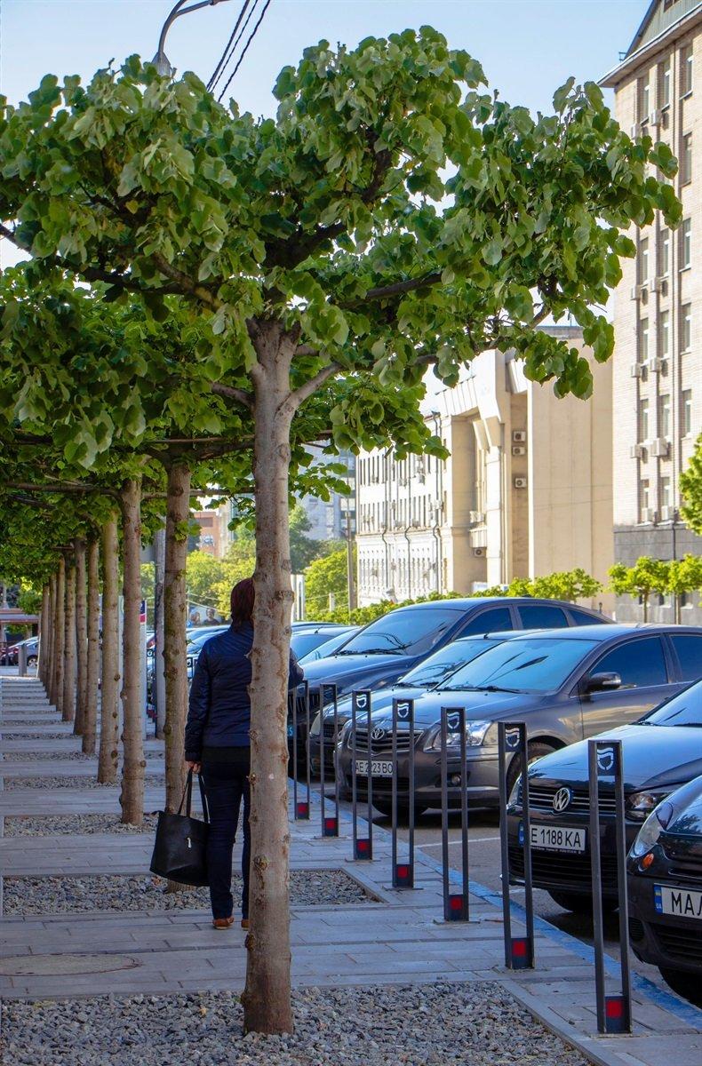 В Днепре высадили 1900 деревьев, - ФОТО, фото-9