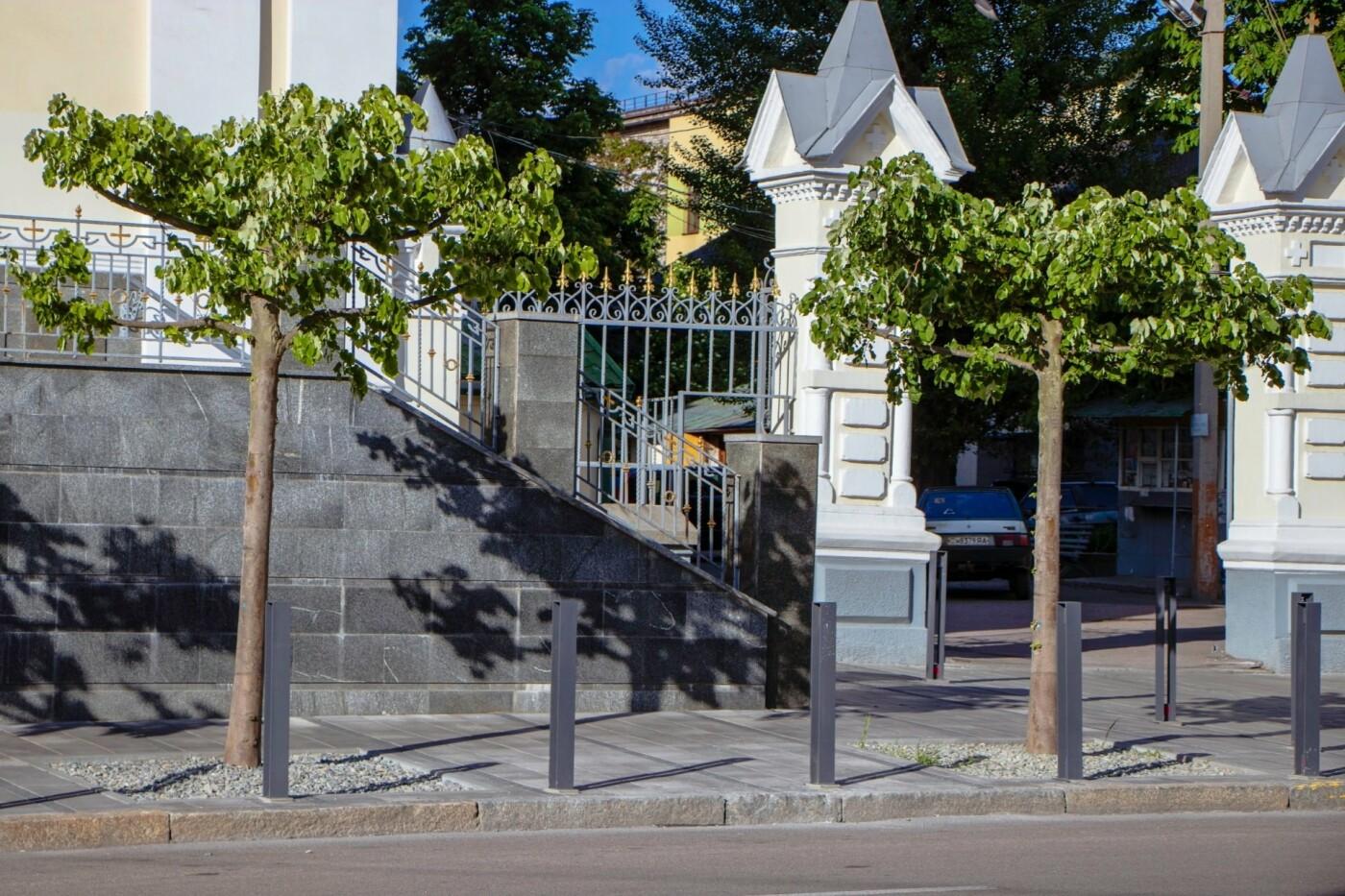 В Днепре высадили 1900 деревьев, - ФОТО, фото-10