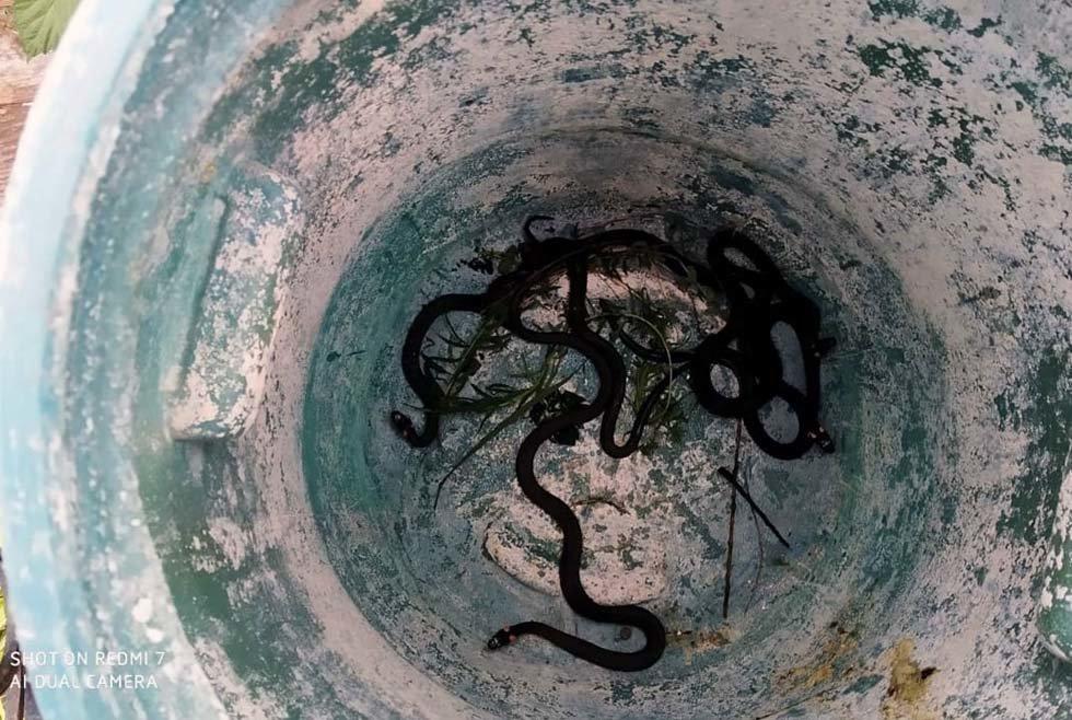 В Днепре во дворе частного дома обнаружили 5 змей, - ФОТО, фото-5