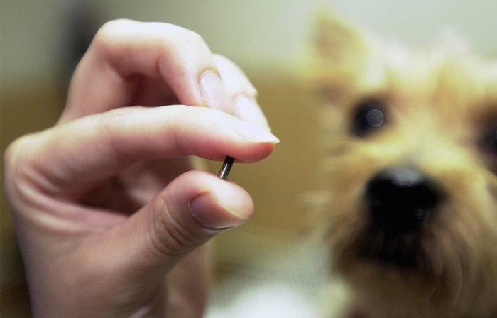 Днепрянам на заметку: чипирование собак, зачем это нужно и сколько стоит, фото-2