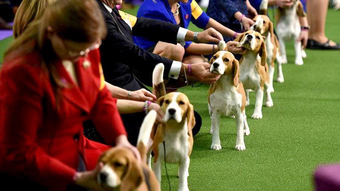 Днепрянам на заметку: чипирование собак, зачем это нужно и сколько стоит, фото-3
