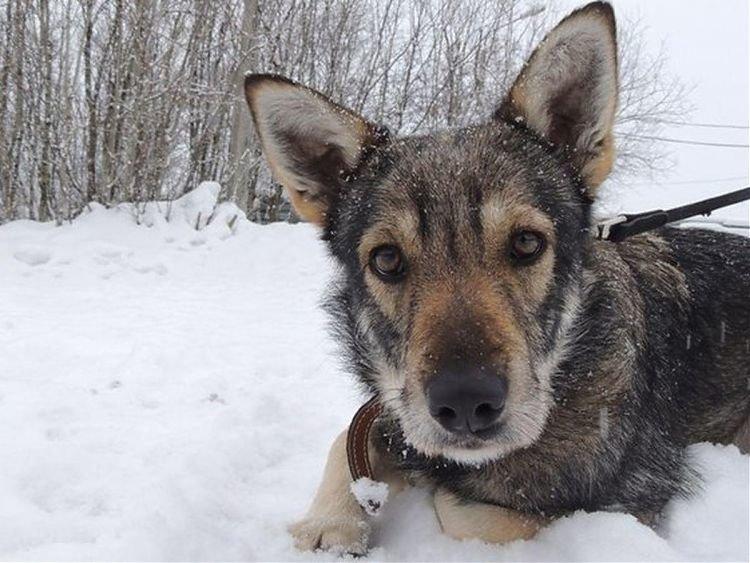 Днепрянам на заметку: чипирование собак, зачем это нужно и сколько стоит, фото-1
