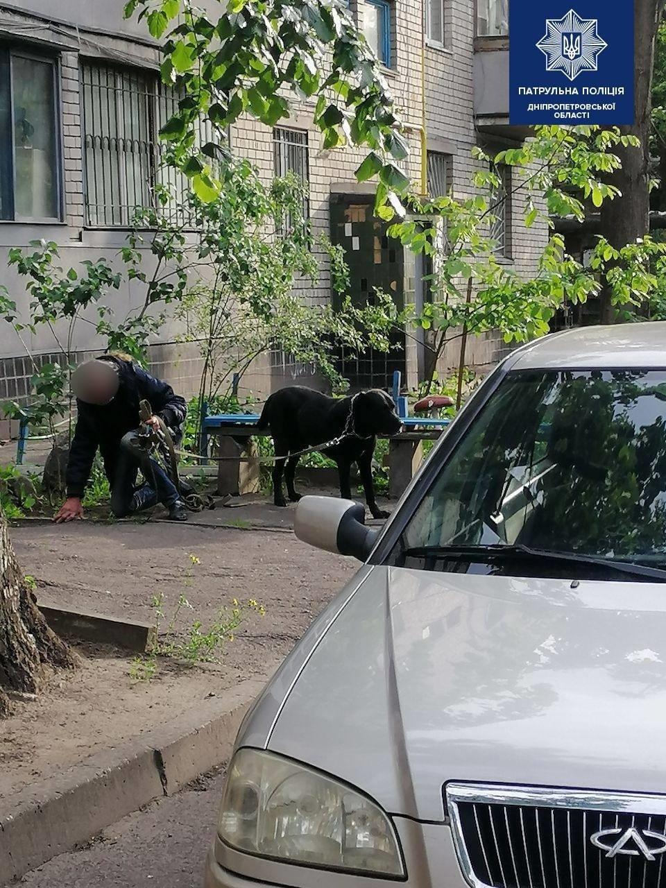 В Днепре собака на поводке набросилась на 7-летнего мальчика, - ФОТО, фото-3