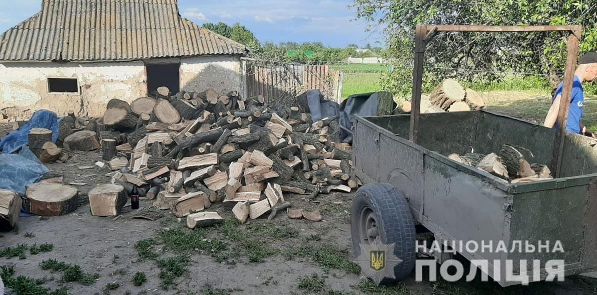 В Днепропетровской области обнаружили более 10 кубов незаконного вырубленного дерева, - ФОТО, фото-1