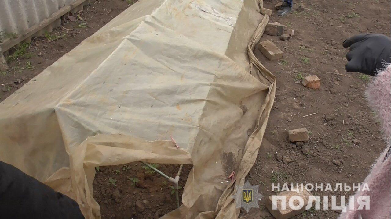 На Днепропетровщине мужчина выращивал в теплице более 30 кустов конопли, - ФОТО, фото-2
