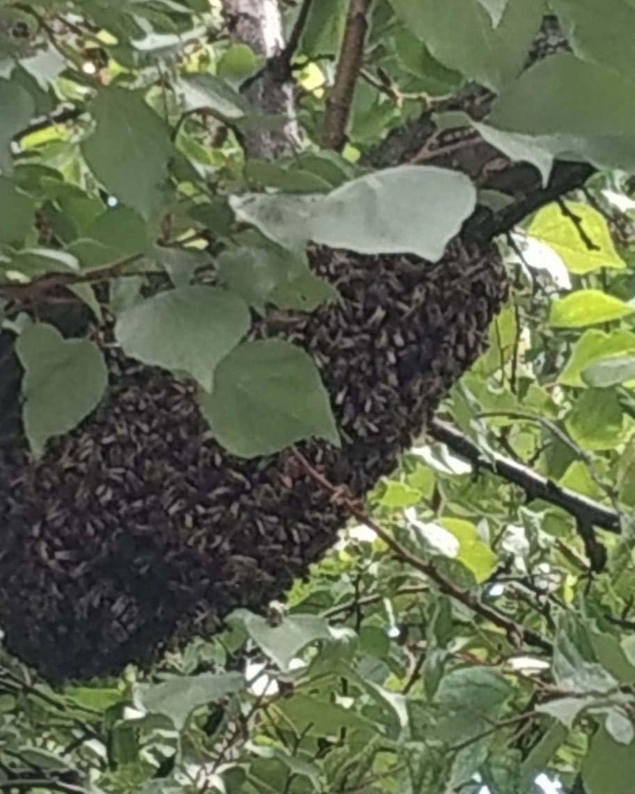 В Днепре рой пчел обосновался возле жилого дома, - ФОТО, фото-1