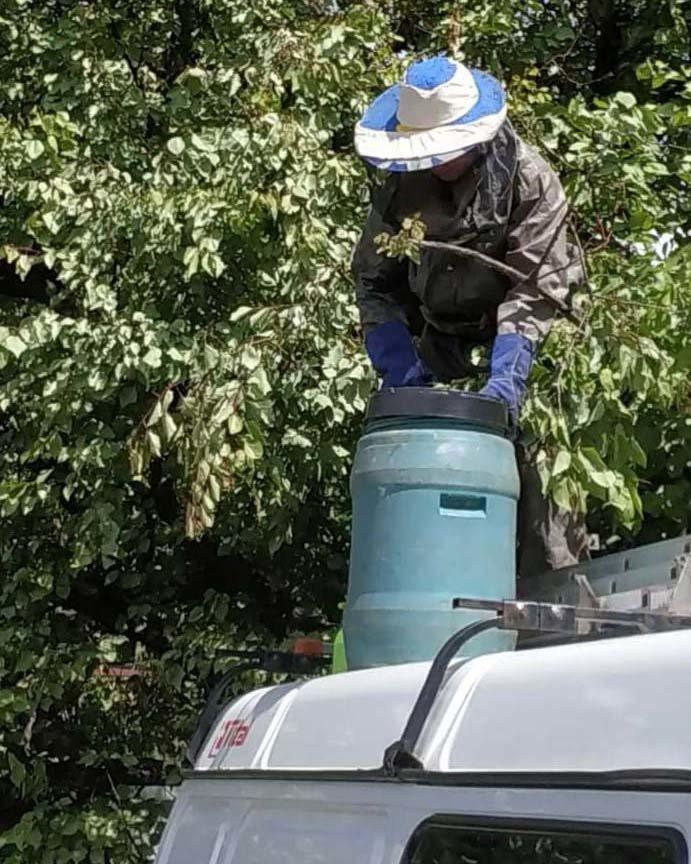В Днепре рой пчел обосновался возле жилого дома, - ФОТО, фото-2