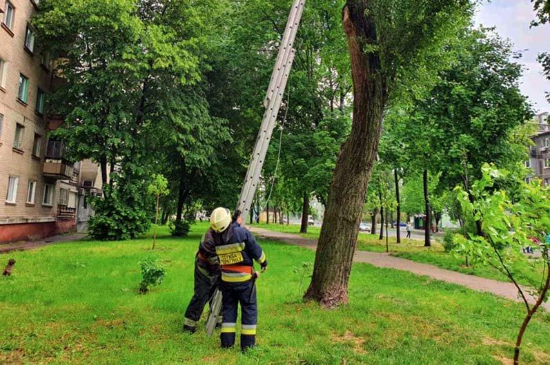 В Днепре спасатели помогли коту, залезшему на высокое дерево, вернуться домой, - ФОТО, фото-2
