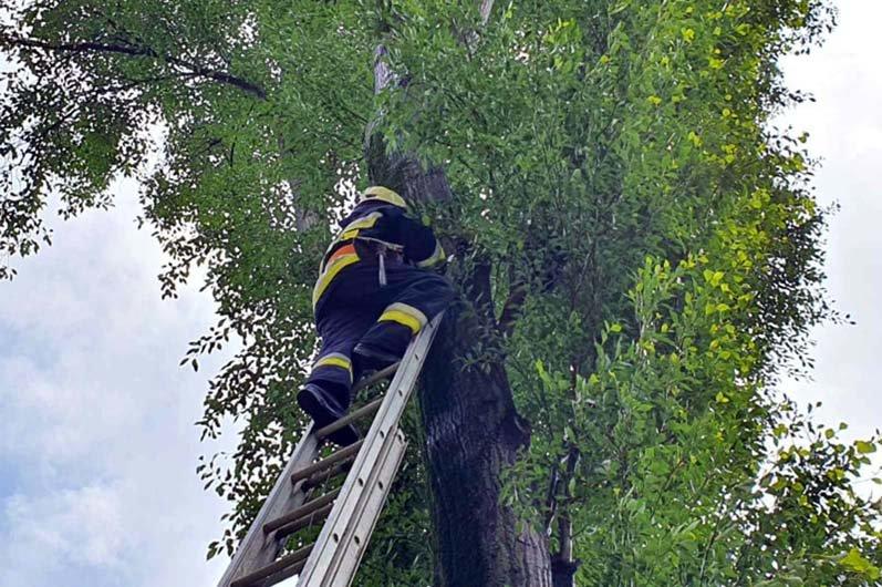 В Днепре спасатели помогли коту, залезшему на высокое дерево, вернуться домой, - ФОТО, фото-4