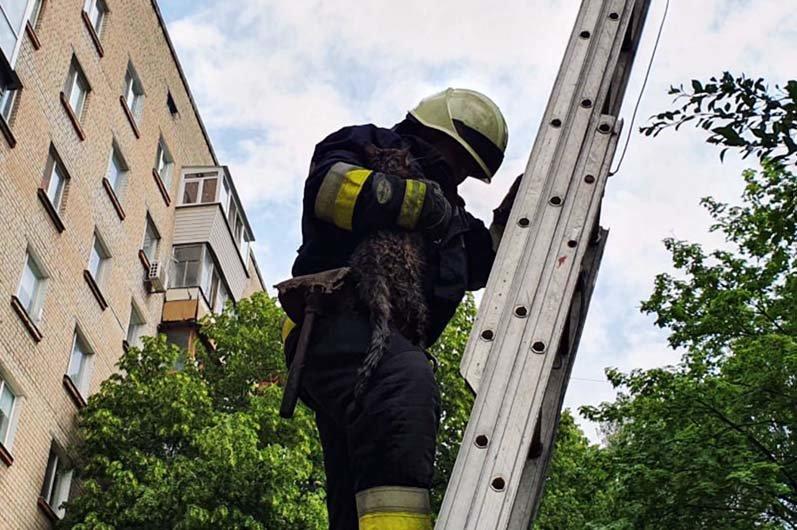 В Днепре спасатели помогли коту, залезшему на высокое дерево, вернуться домой, - ФОТО, фото-3