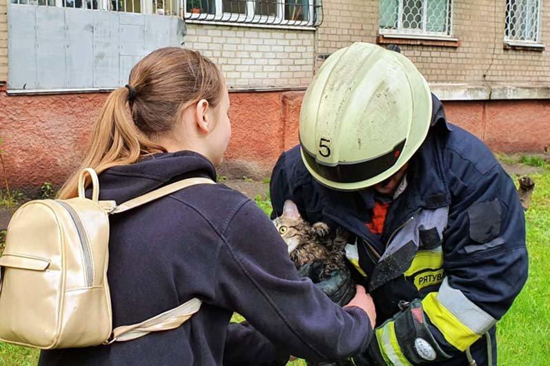 В Днепре спасатели помогли коту, залезшему на высокое дерево, вернуться домой, - ФОТО, фото-1