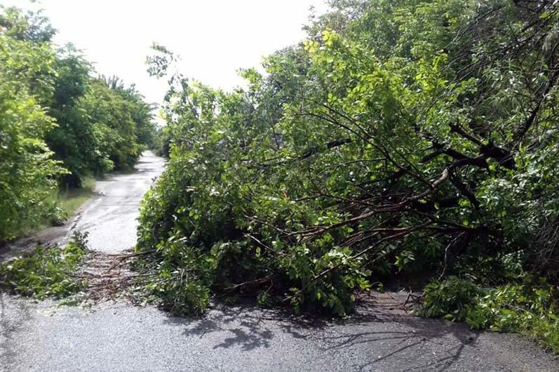 В Днепре поваленное дерево преградило движение транспорта, - ФОТО, фото-1