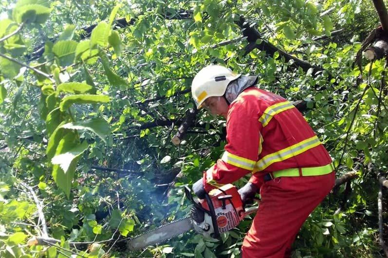 В Днепре поваленное дерево преградило движение транспорта, - ФОТО, фото-2