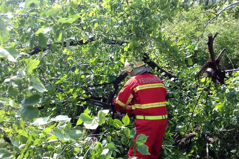 В Днепре поваленное дерево преградило движение транспорта, - ФОТО, фото-3