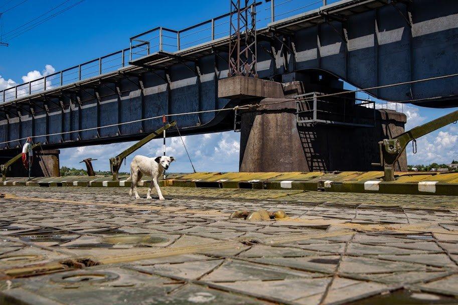 В Днепропетровской области открыли временный понтонный мост, - ФОТО, ВИДЕО, фото-8