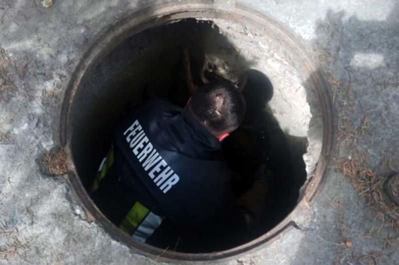 Под Днепром сотрудники ГСЧС доставали собаку из канализационного колодца, - ФОТО, фото-2