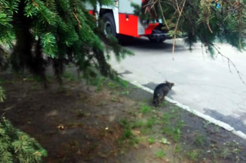 Под Днепром сотрудники ГСЧС доставали собаку из канализационного колодца, - ФОТО, фото-3