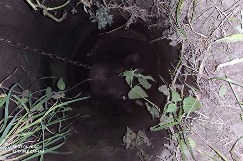 Под Днепром пожарные спасли корову, которая упала в колодец, - ФОТО, фото-1