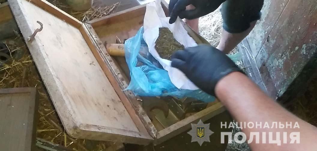 На Днепропетровщине у местных жителей обнаружили более 2 тысяч кустов конопли, - ФОТО, фото-4