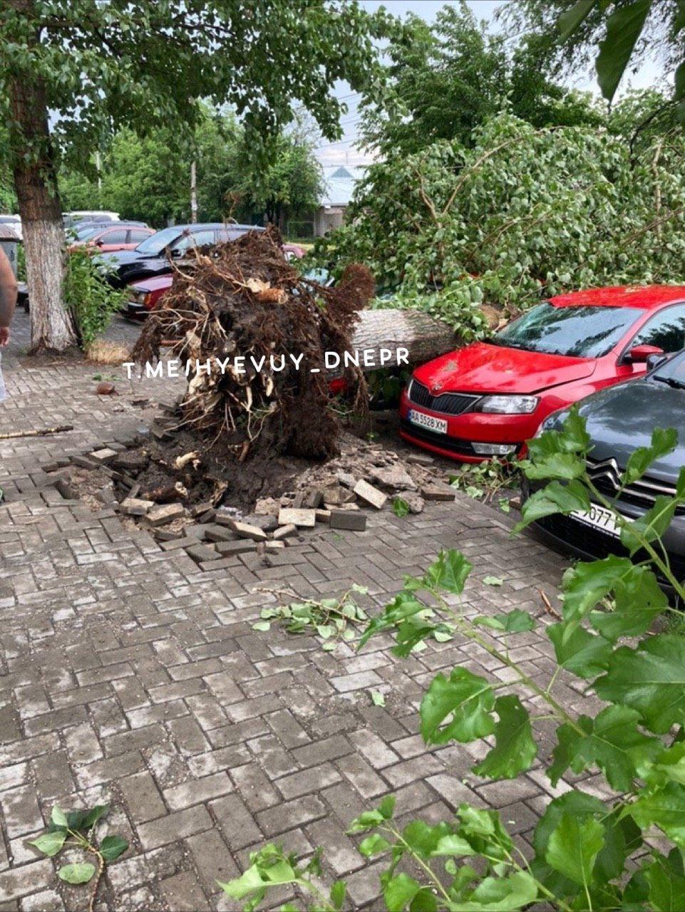 Деревья в лобовом стекле и сломанные заборы: последствия непогоды в Днепре, фото-2