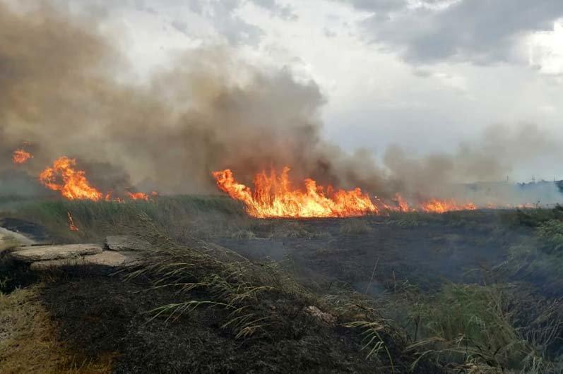 """""""Чрезвычайная опасность"""": за сутки в Днепропетровской области произошло 37 пожаров, - ФОТО, фото-3"""